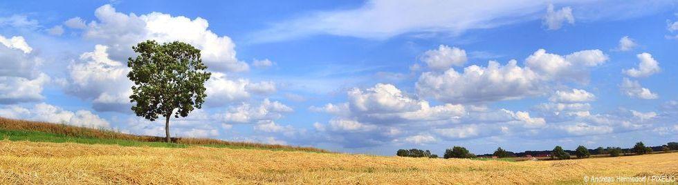 Eine Sommerlandschaft: Ein einzelner Baum steht am Rande eines abgeernteten Kornfeldes.
